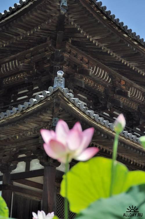 Zen-photo ч.92