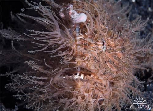 Фотограф Александр Мариничев. Подводный мир. 3 часть.
