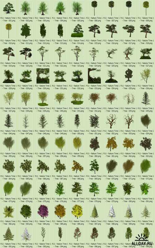 Клипарт - Деревья и кусты