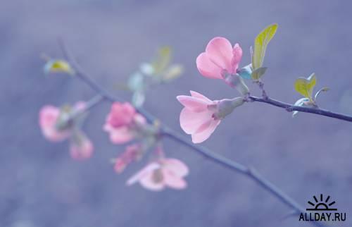 Мир в Фотографии - World In Photo 558