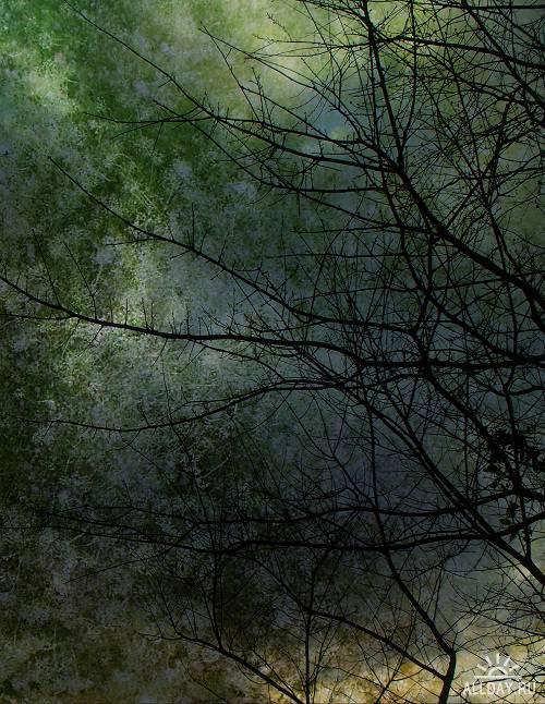 20 Fantastic Natural Backgrounds Vol.10