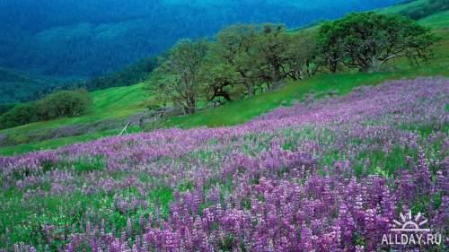 Замечательная подборка красивой природы .Фото обои 4.