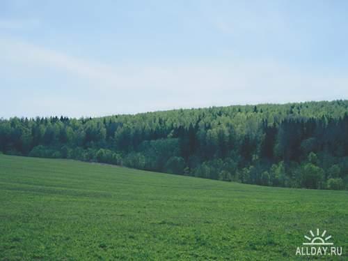 Природа: поля и луга (подборка изображений)