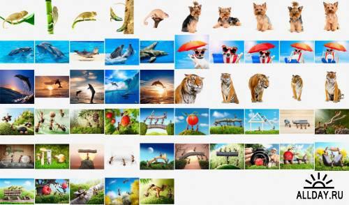 Shutterstock Mega Collection vol.7 - Animals