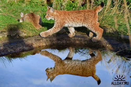 По следам животных #2