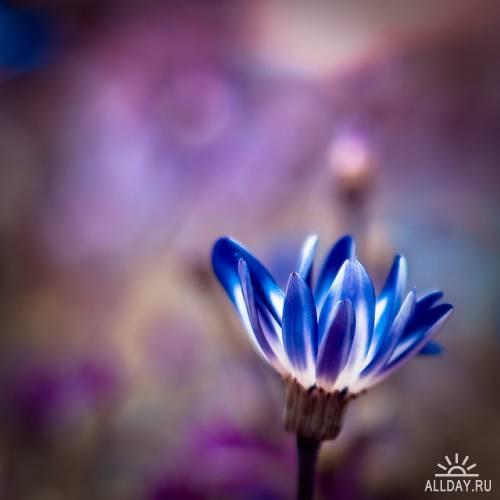 Красивые фотографии цветов от Harold Lloyd