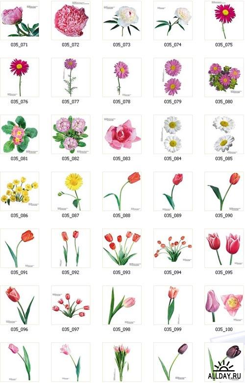 IZ047 Цветы 2