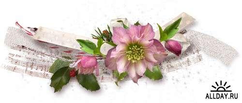 Рождественская роза - хелеборус на прозрачном фоне