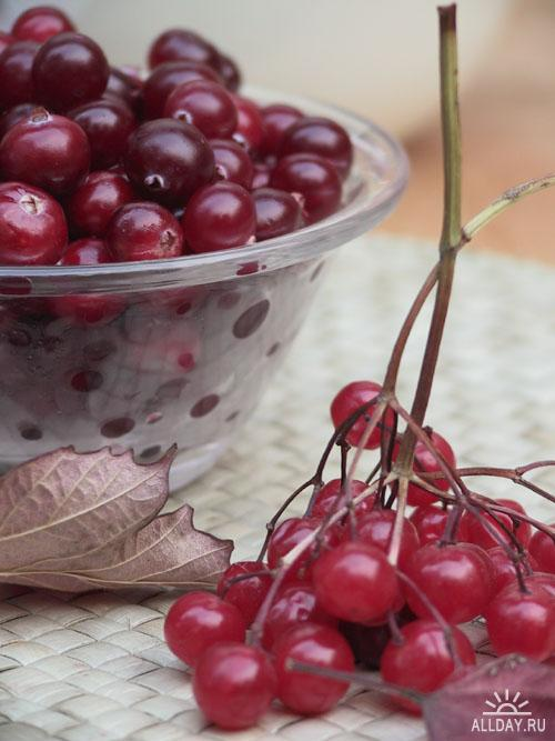 SpottyDVD - Berry