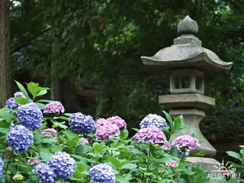 Японская тематика 3