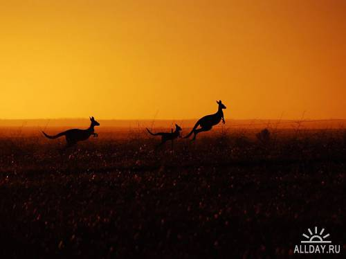 Лучшие фотографии National Geographic за июль