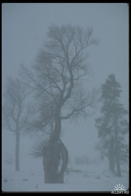 Клипарт - Yellowwstoune National Park