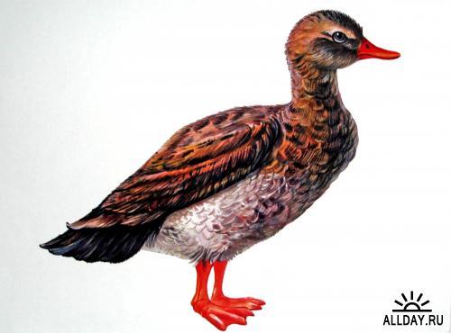 Клипарт Домашние животные и птицы