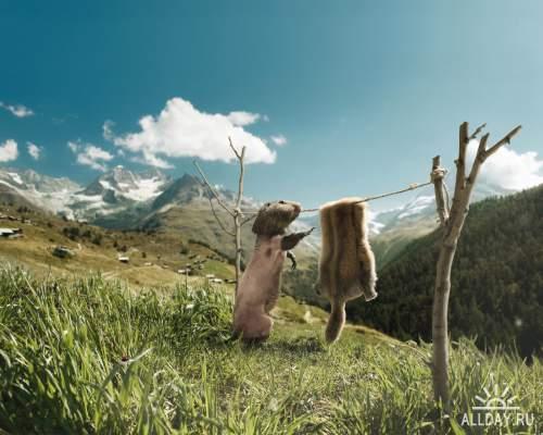 Прекрасный мир животных 2