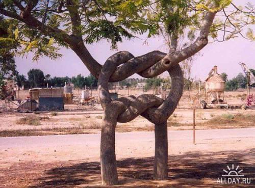 Деревья красивые и необычные !