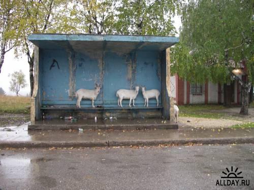 Непредсказуемый дизайн  следующей автобусной остановки