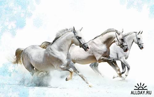 Stock photo - Beautiful Horses (  Красивые Лошади)