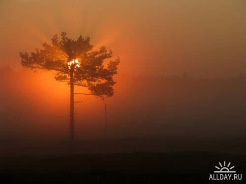 Фотограф Petri Volanen