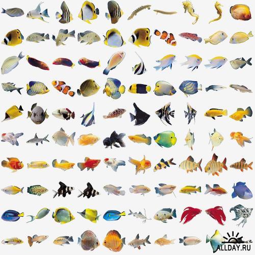 Fish Images (IMOR-V014)