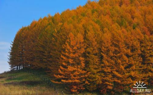 Красивая природа HD Wallpapers #4