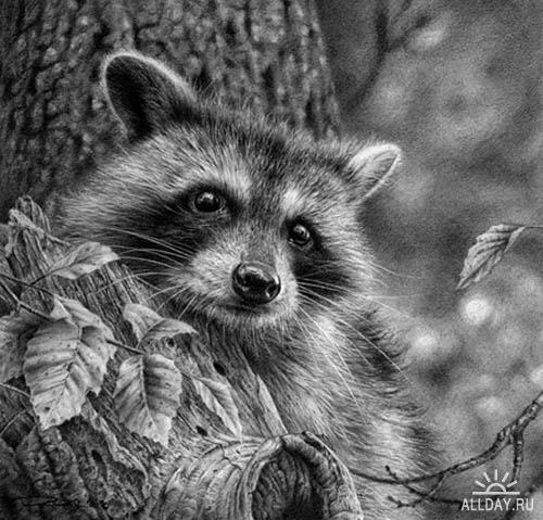 Животный мир глазами Denis Mayer Jr.