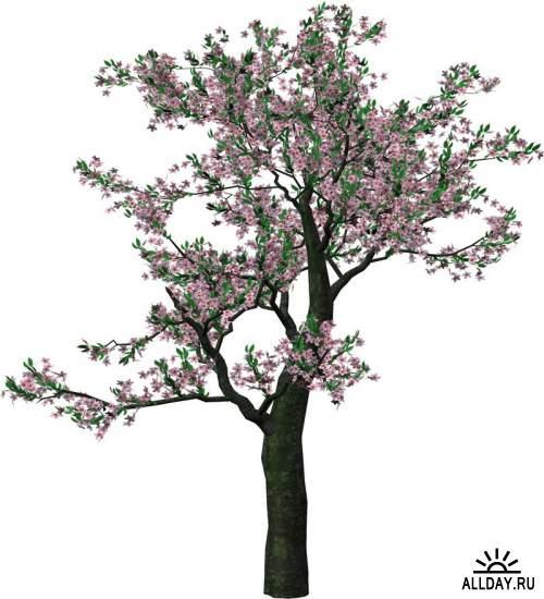 Spring, flowers, trees 3   Весна, цветы, деревья 3 - Набор элементов для коллажей и скрапбукинга