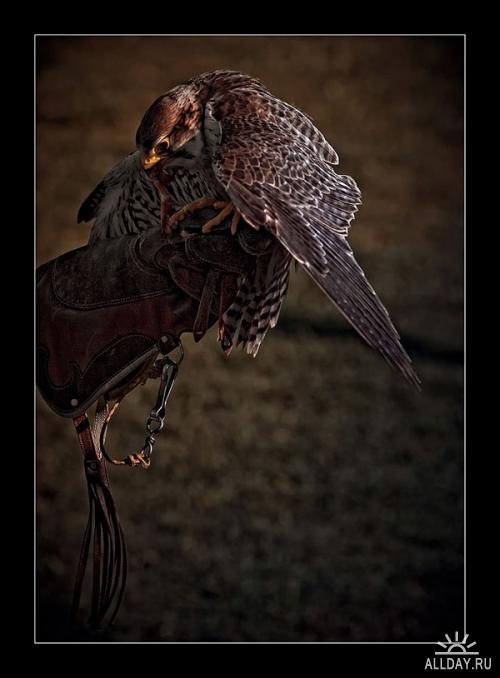 Tolo Duran Photography