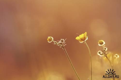 Мир в Фотографии - World In Photo 697
