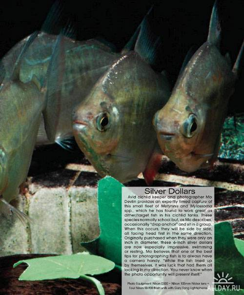 Tropical Fish Hobbyist №9 2012