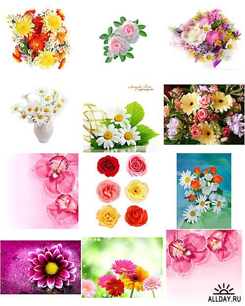 Цветочные композиции - растровый клипарт   Flower decorations