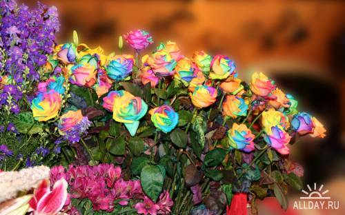 85 Great Mixed HQ Color HD Wonderful Wallpapers
