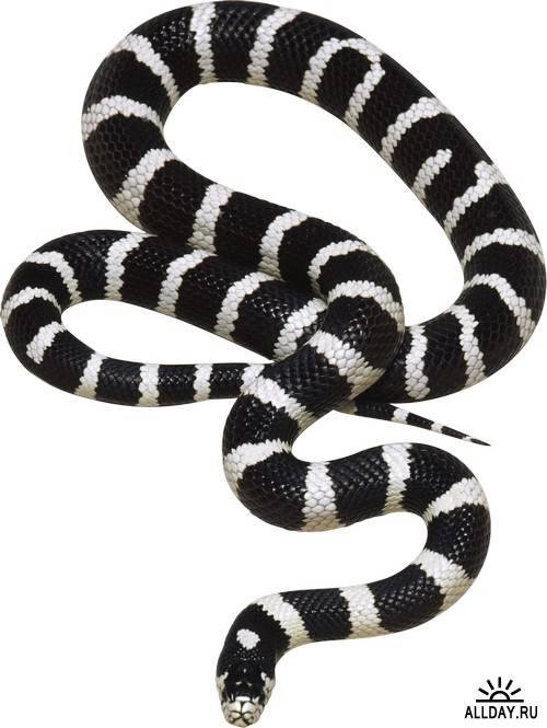 Snake - symbol 2013 | Змея - символ 2013 года
