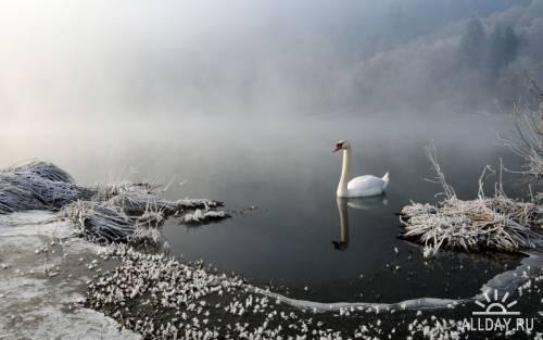 Мир в Фотографии - World In Photo 664