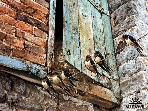 Рисунки птиц