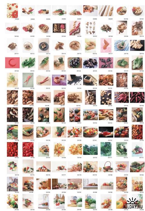 Datacraft Sozaijiten Vol. 093 - Vegetables in Season