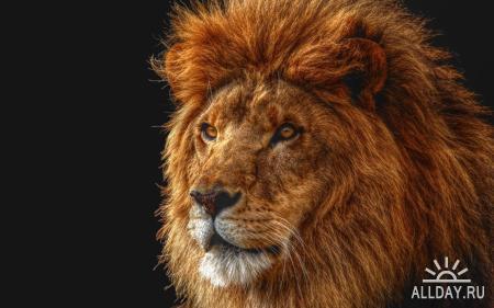 Animals WideScreen Wallpapers #21