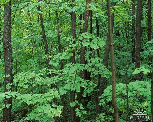 Разнообразность лесов