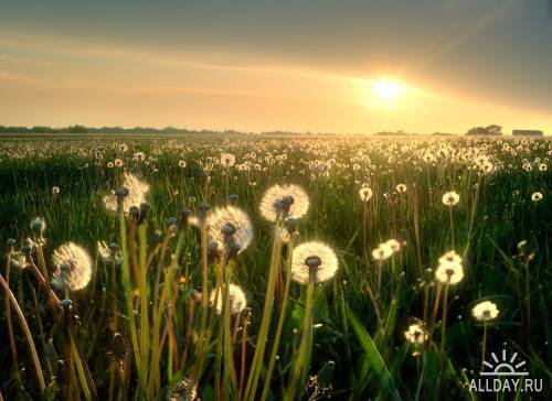 Мир в Фотографии - World In Photo 518