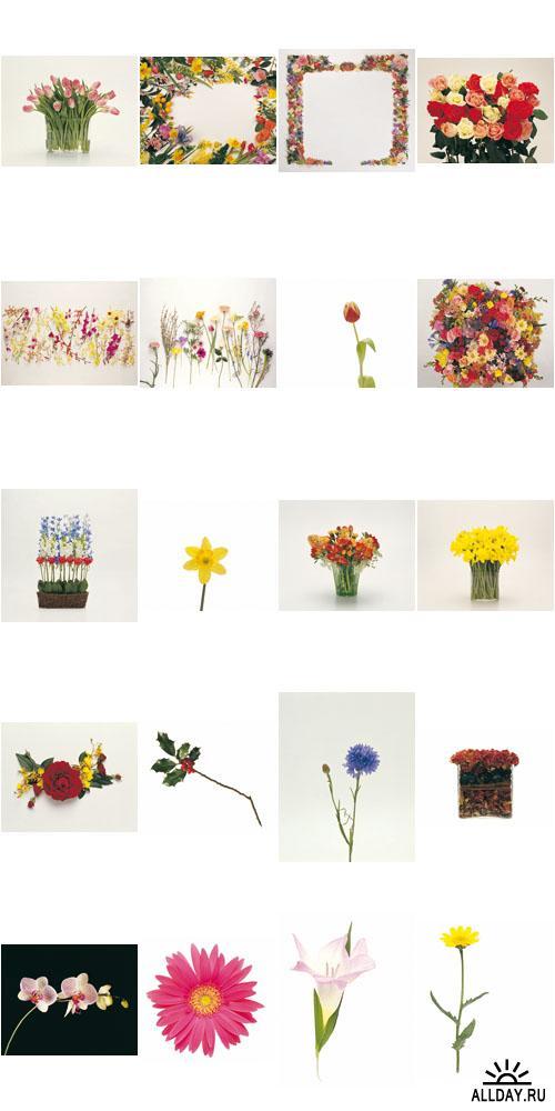 Digital Vision | DV027 | Floral Design Elements