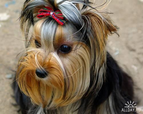 Фотосток – Собаки 5