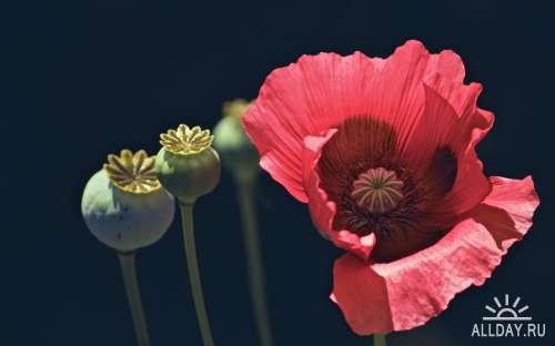 Коллекция прекрасных фото цветов для рабочего стола выпуск 44