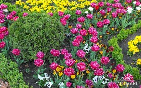 Flowers WideScreen Wallpapers #7