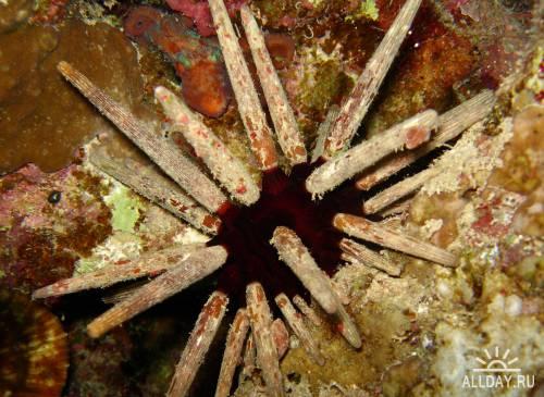 Окружающий мир через фотообъектив - Aquatic environment ( Водная среда обитания)Часть 7