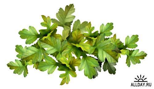 Different leaves 3| Разные листья 3 - Набор элементов для коллажей и скрапбукинга