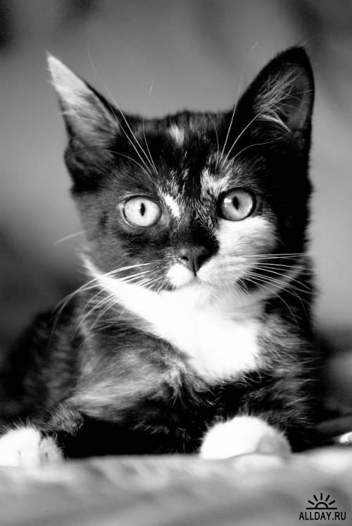 Котики ч.90