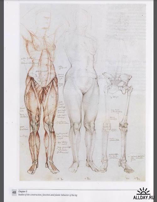 Gottfried Bammes (The Artist's guide to human anatomy)