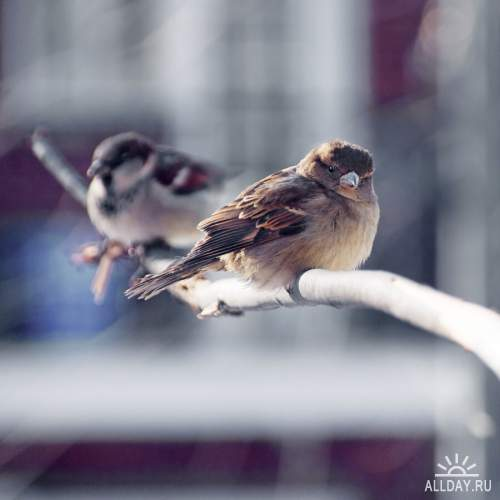 Мир в Фотографии - World In Photo 923