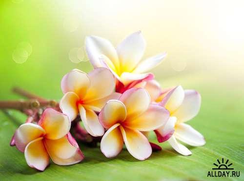 Летние цветы - Растровый клипарт | Summer flowers - UHQ Stock Photo
