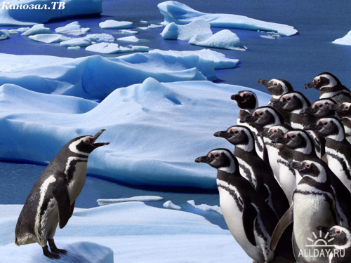 Зимние фото животных