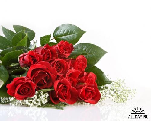 День Св. Валентина - растровая МЕГАКОЛЛЕКЦИЯ